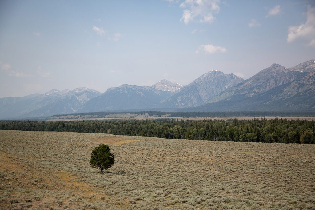 single tree in open prairie with Teton mountains in distance