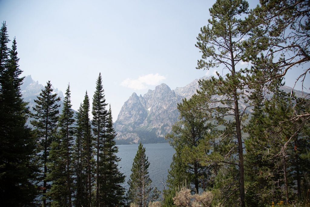 Mountain lake View through evergreen trees