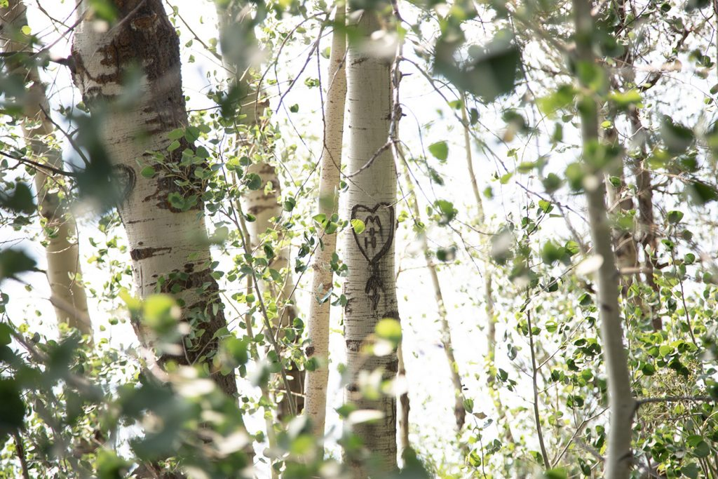 initials carved in aspen tree
